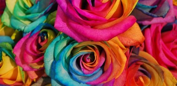 Купить семена розы
