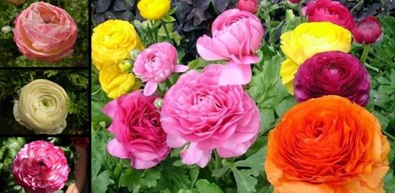 Семена цветы купить