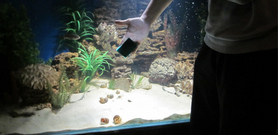 Какие условия для рыбок в домашних условиях 797